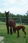 CCNF Andean Silk and her newborn daughter
