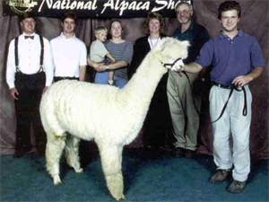 Left to right: Tripp and Ty Forstner, a 2-year-old Sam Lutz, Jennifer Lutz, Libby and Jerry Forstner, and yours truly at the 2000 AOBA National Auction with MFI Peruvian Savanna.